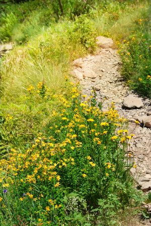 walking trail: Summer landscape. Walking trail through the alpine meadow to the top of the mountain.