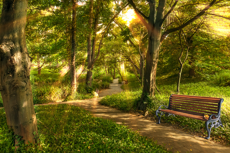 walking paths: Bench in summer park with old trees and walking paths in the morning sun. Stock Photo