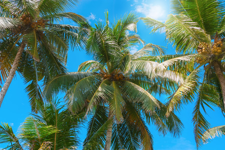 Exotic view with palm trees against blue sky.