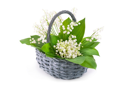 Bouquet of white lily of the valley (Convallaria majalis) in basket on white background. Stock Photo