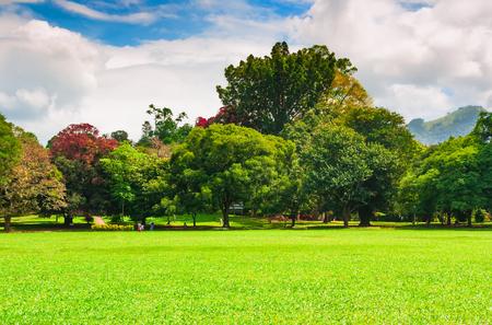 夏の公園は、緑の芝生と青い曇り空。 写真素材