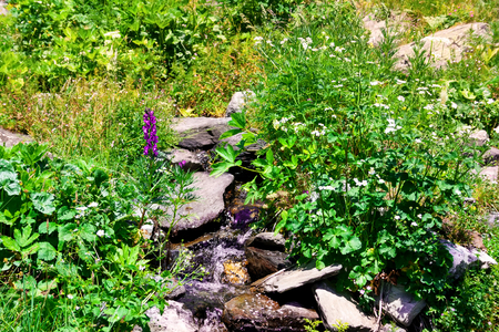 Clear water flowing to a stream on a mountain , blooming vivid wild flowers against green grass background. Stock Photo
