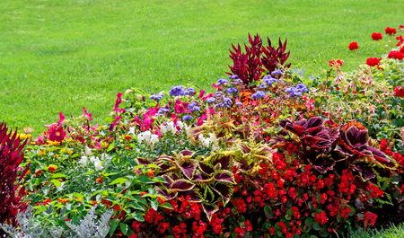 variegated: Beautiful garden with multicolored flowerbed on a lawn Stock Photo