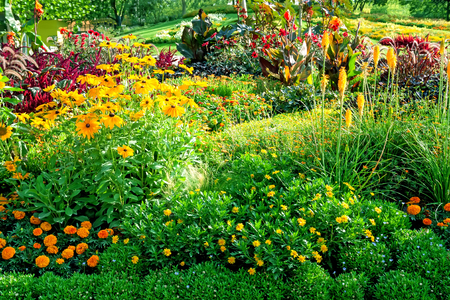Beautiful background with colorful flowers on the flowerbed in city garden. Stock Photo