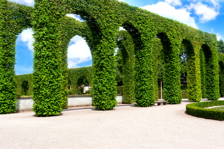 Beautiful garden with green hedges with trees, with broad alleys .