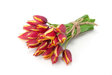 Bouquet of bright red tulips isolated on white background.
