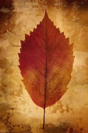 grunge leaf (great old paper texture(special fx,all art elements and prints made by me  ) photo