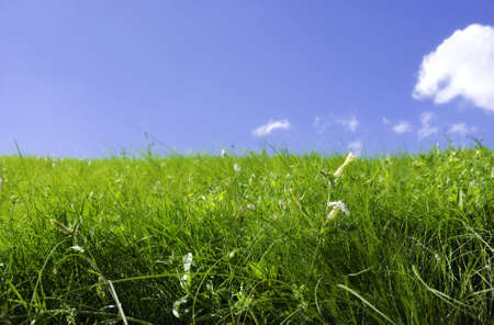 fresh meadow, focus point on nearest grass Stock Photo - 1327921