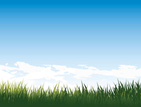 medow with fresh green grass and pure blue sky and clouds  photo