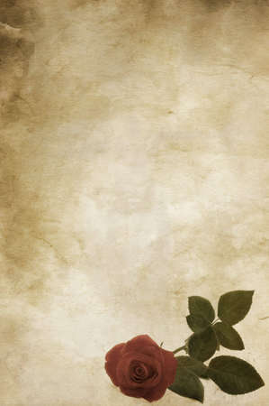 vintage design with rose photo