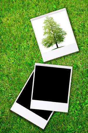 summer blank Stock Photo - 5110549