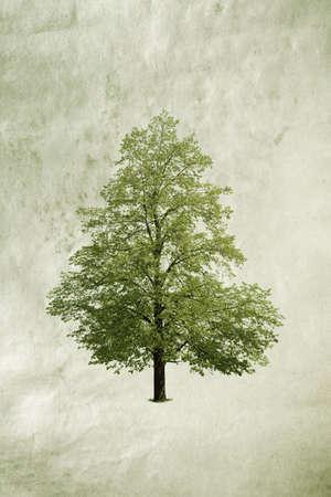 tree Stock Photo - 6049158