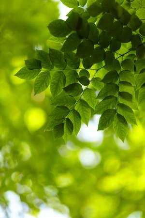 lush foliage: foliage