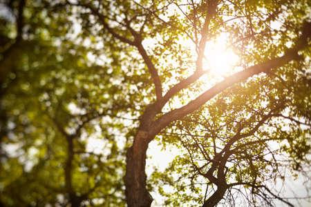 tilt shift: summer tree, natural light, selective focus, made with tilt-shift lens