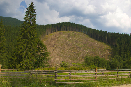 Carved forest on the mountain in the Carpathians.