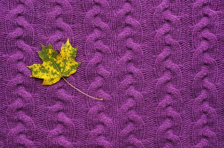 Maple Leaf On A Purple Knit Sweater Colorful Autumn Leaves On