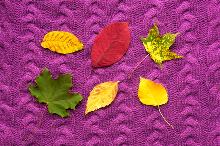 Autumn leaves on a purple knit background. Autumn composition on a violet background. Stock Photo
