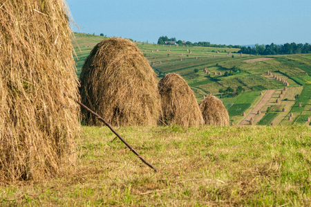 Field with haystacks in the sunny day. Rural landscape; hey rolls on the field at the mountain in Ukraine.