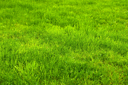 Fresh green manicured lawn close up. Clipped green grass background. Green lawn background. Green lawn pattern textured background.