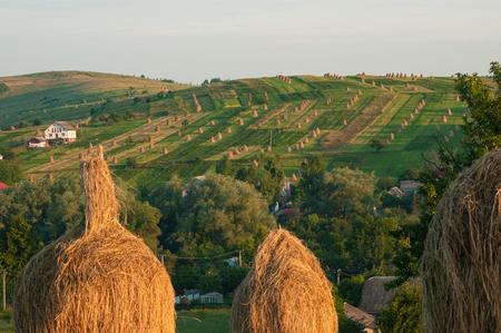 Gebied met hooibergen in de zonnige dag. Landelijk landschap; hey rolt op het veld bij de berg in Oekraïne.