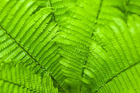 신선한 녹색 펀 정원에서 흐림 배경에 나뭇잎. 신선한 고 사리 잎 질감. 스톡 콘텐츠