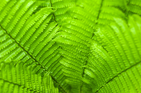 Fresh green fern leaves on blur background in the garden. Texture of fresh fern leaves. Reklamní fotografie