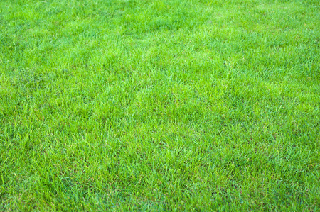 Fresh green manicured lawn close up. Clipped green grass background. Green lawn pattern textured background.