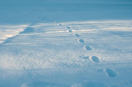 Zbliżenie ślady stóp w świeżym śniegu w mroźny poranek. Ślady zwierząt w najgłębszym śniegu na polu. Zdjęcie Seryjne