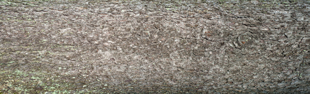 Embossed texture of the bark of fir. Panoramic photo of the fir texture.