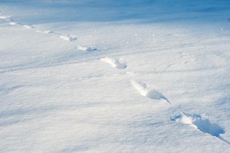 Snow tracks on a sunny day