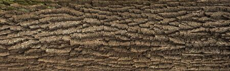 Relief texture of the brown bark of a tree with green moss on it. Horizontal photo of a tree bark texture. Relief creative texture of an old oak bark. Reklamní fotografie