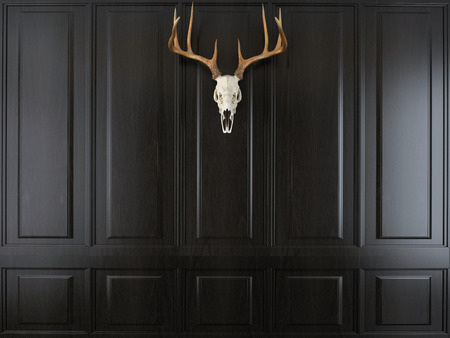 deer skull with horns on wall