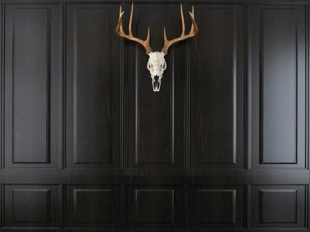 huge antlers: deer skull with horns on wall