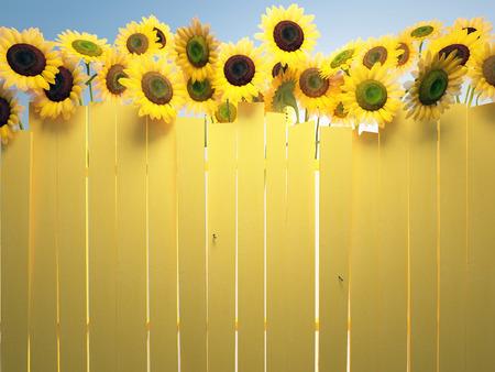 Girasoles cielo y valla amarilla Foto de archivo - 35757448