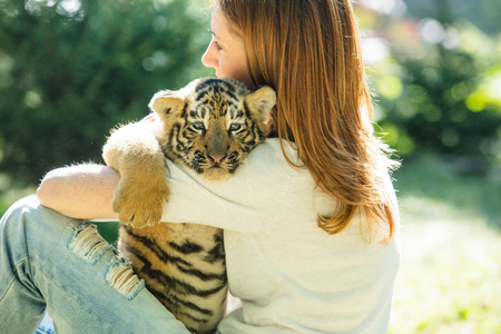 Little baby tiger cub with a woman who takes care of and hugs him in her arms in the wild