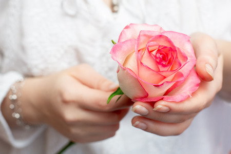 a pink rose in the hands of a girl. beautiful hands. a gift to your beloved. 스톡 콘텐츠