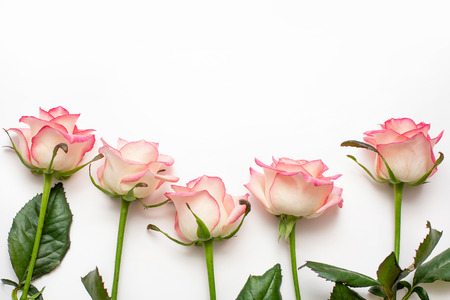 five pink roses on a white background, beautiful fresh roses,