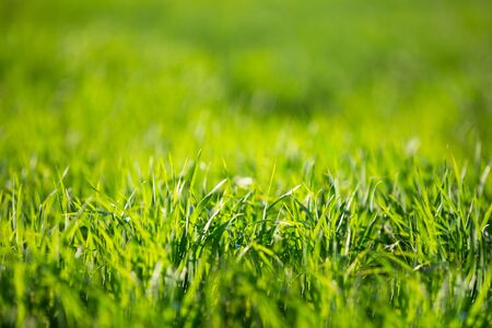 Hierba verde en un día de verano. Foto de archivo