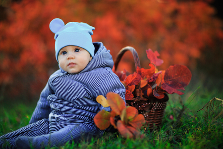 Cute baby in autumn park. Little boy sits on grass with a basket of leaves. Portrait toddler kid outdoors. - Image