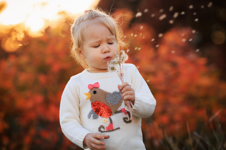 Small girl blowing dandelion flower in the autumn park. Blurred background in sunset. Child with blowball in outdoor. - Image