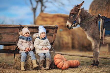 Children play in a cart with a donkey in the village . Kids have fun on the farm. Girls in warm clothes, hats, coats, scarves with a burro.