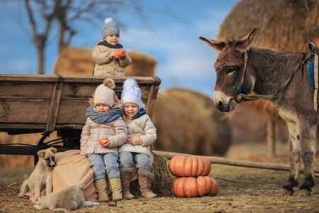 Children having fun on a farm with a donkey, dogs near a cart in the village. Kids in warm clothes playing with the animals.