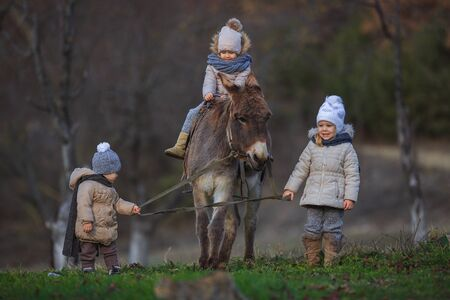 Children ride a donkey. Little kids in warm jackets and hats in nature with a burro.