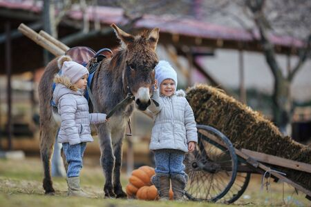 Children play in a cart with a donkey in the village . Kids have fun on the farm. Girls and boy in warm clothes, hats, coats, scarves with a burro.