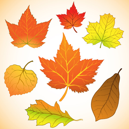 autumn leaf: illustration of a set of autumn leaf
