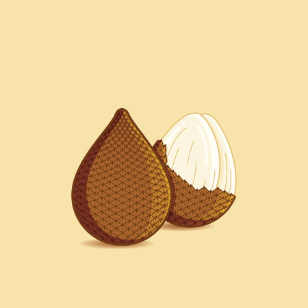 Salak fruit vector illustration