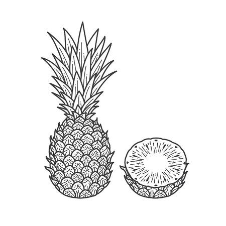 Pineapple fruit illustration Çizim
