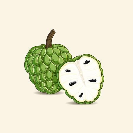 vector illustration of tropical fruit known as custard apple