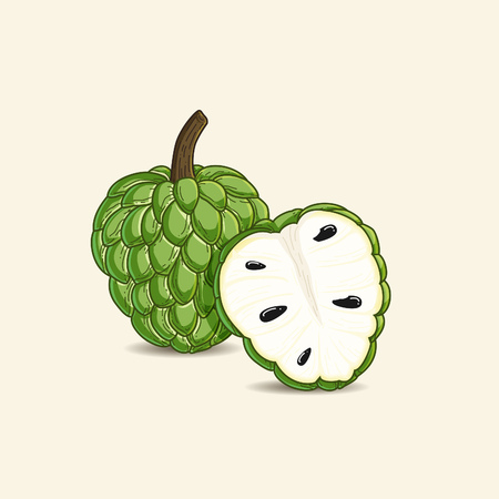 vector illustration of tropical fruit known as custard apple