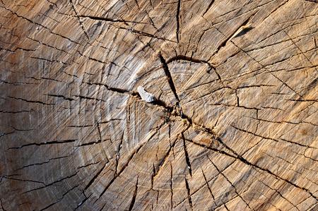 scarring: vecchio ceppo di legno con cicatrici